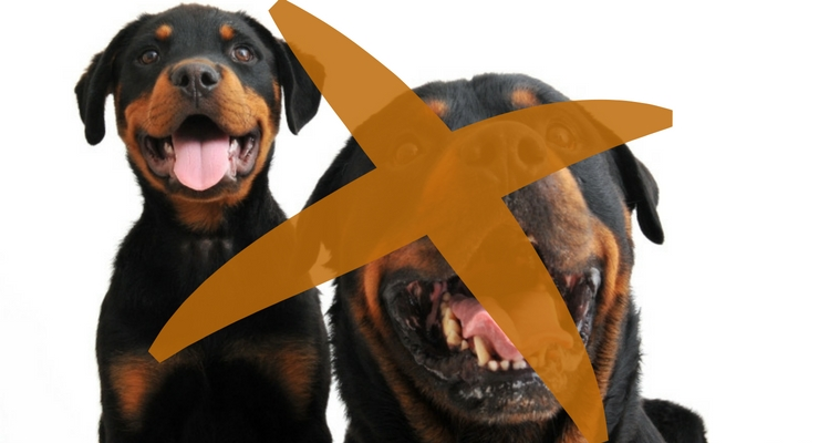 Nooit meer Rottweilers