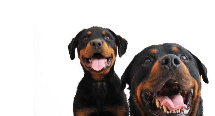 Beleid Hoog Risico Honden bij voorbaat al een mislukking