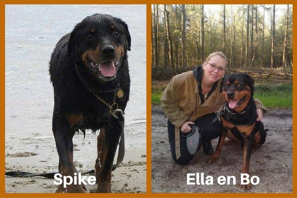 Rottweilers van Ella