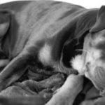 Hoe ver ga je met medische behandeling van je hond?