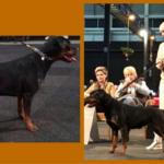 Waarom deelnemen aan een hondenshow?