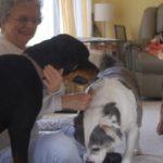 Ben ik te oud voor een Rottweiler pup?