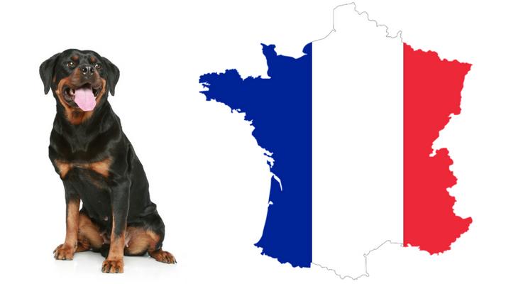 Met je Rottweiler op vakantie naar Frankrijk. Mag dat?
