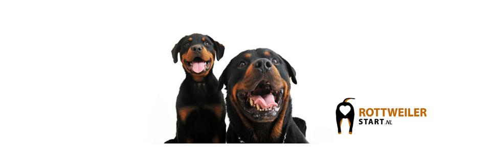 Rottweiler Start Facebook