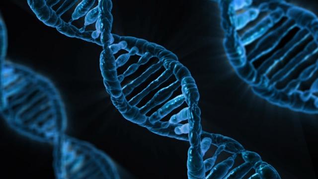 vechten zit in het DNA