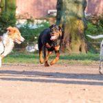 Cursus voor alle hondenbezitters moet verplicht worden