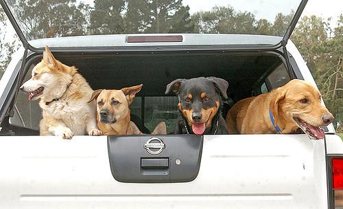 cursus voor alle hondenbezitters