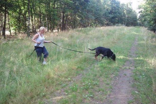 Speuren met een senior Rottweiler