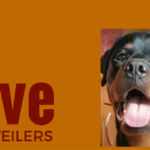 Rottie Website 'Love Rottweilers'
