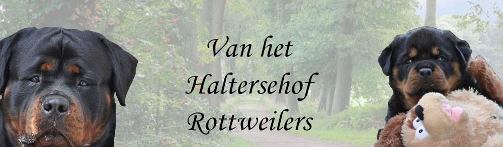 Van het Haltersehof Rottweilers