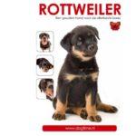 Rottweiler: één bonk betrouwbaarheid