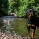 Hondenuitlaatservice: van hobby naar beroep!