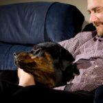 Waarom leunen Rottweilers tegen je aan?