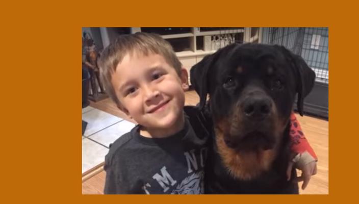 Rottweilers en kinderen