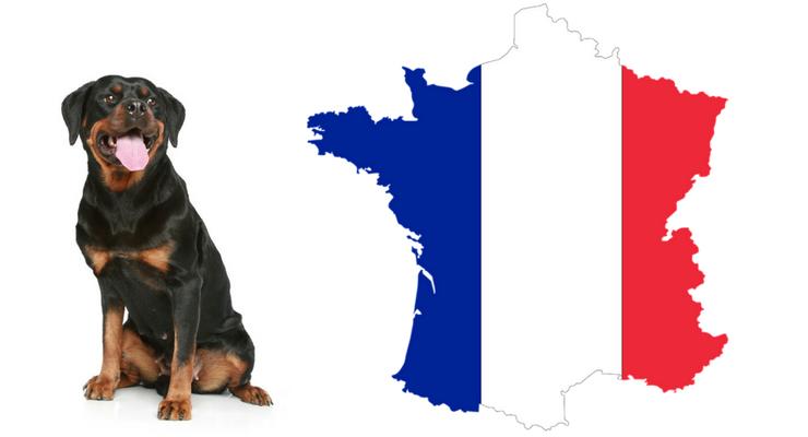 Rottweiler mee op vakantie naar Frankrijk