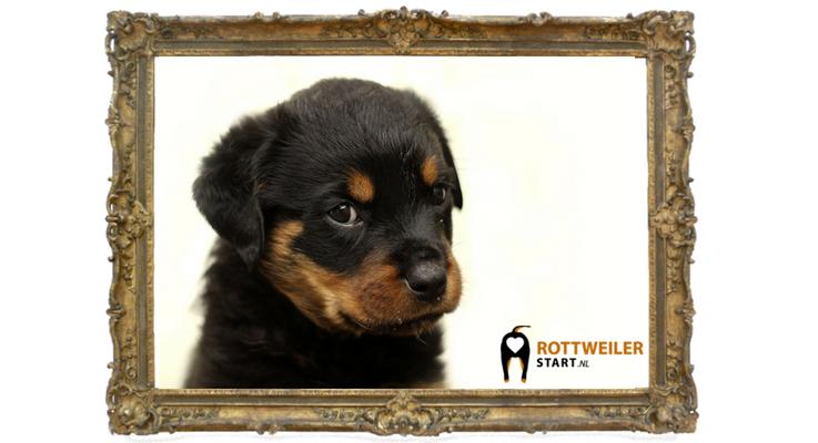 Opgezette Rottweiler tentoongesteld in Haarlem