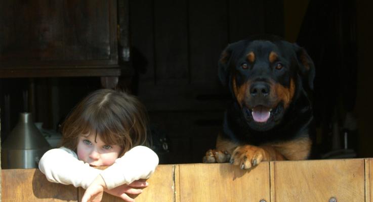 Kinderen leren omgaan met Rottweilers