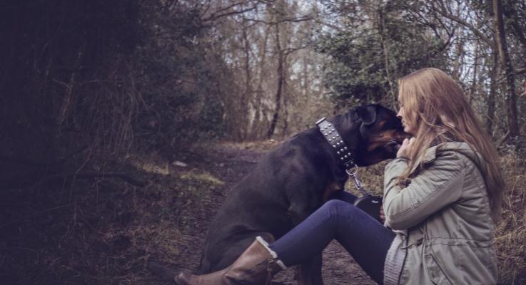 Rottweiler helpt een gebroken zuster