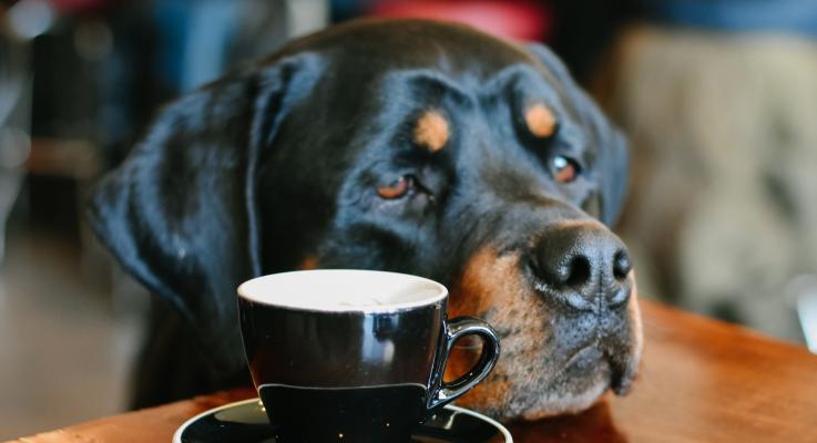 Hoog Risico Hond: waar is hij gebleven?