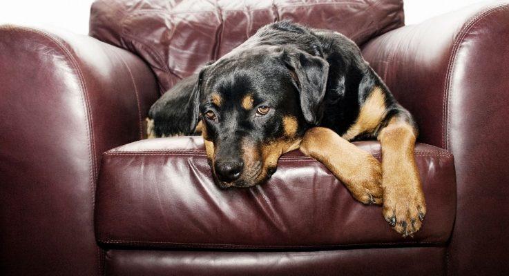 Geen geld voor je hond: wegdoen of houden?